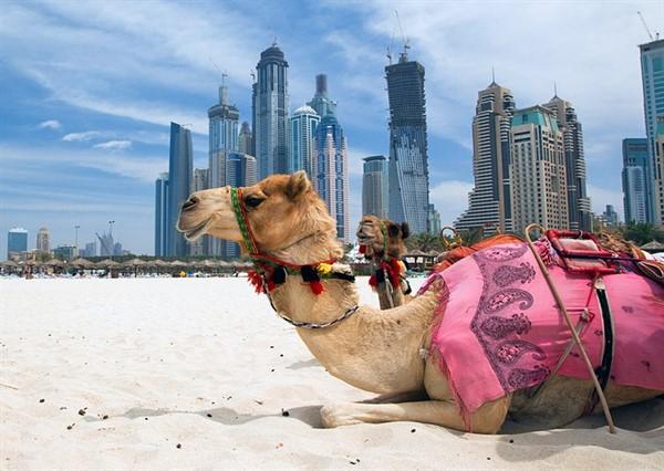 Offerte Crociere MSC, Costa Crociere, Royal Caribbean, Azamara Club Cruises, Celebrity Cruises, Norwegian Cruise Line, Dubai/Emirati Arabi. Volo + Hote